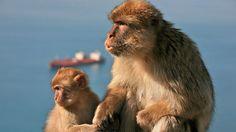 A village full of monkeys…